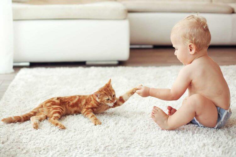 Как проявляется аллергия на кошек у детей фото
